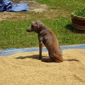 コケの生えた犬