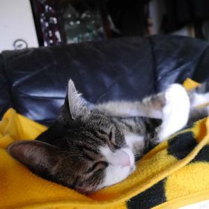 スター猫のすずめちゃんよりももっちはかわいいのだ!!