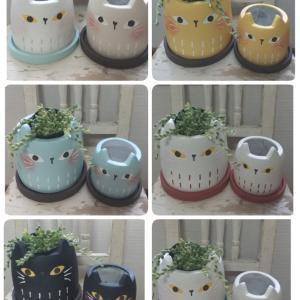 猫ちゃん鉢
