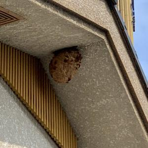 ぼったくり蜂の巣駆除業者