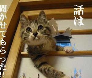 4/20まで!質問ぢ個千円で、ペットの通訳致します 動物、植物の話を聴きます.