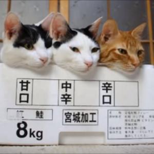 2021.07.26 今日の開運行動 マヤ歴新年