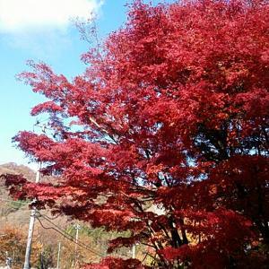 きれいな紅葉