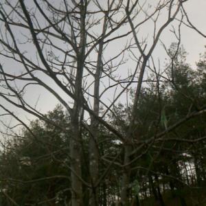 隅のかしら 雑木