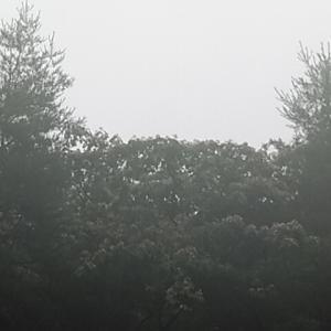 雨の中おっはー!