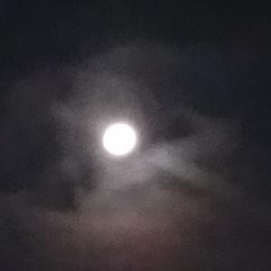 キレイなお月様