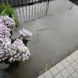 雨の日のキーマカレー