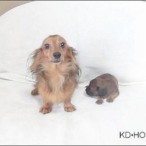 カニンヘンダックス動画:ミモザちゃんベビー生後20日になりました