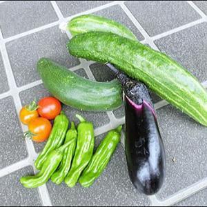 家庭菜園:今日の収穫