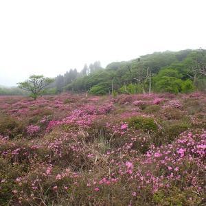 23日.ミヤマキリシマの開花状況を見に高千穂河原へ