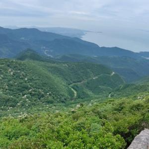 20日.九千部岳の斜面を白く埋めるヤマボウシを観に