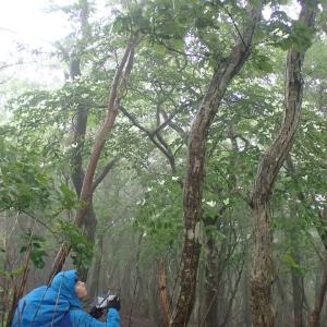 雨の日は大浪池でお山歩