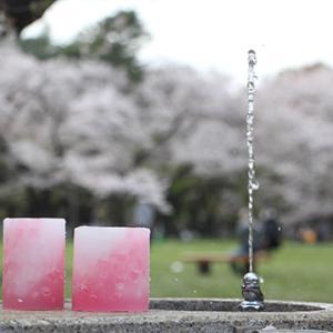 桜とキャンドル・団子・犬