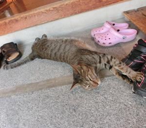 暑い日の猫たちの居場所。