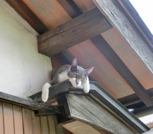 ★姫路の猫寺(=^・^=)★