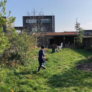 Garden renewal step 1 ー庭のリニューアル その1ー