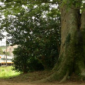 大木の下で