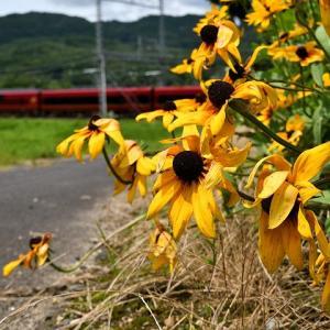 沿線に咲く花