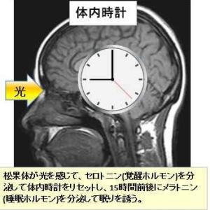 体内時計の乱れが免疫の老化に繋がっても・・・