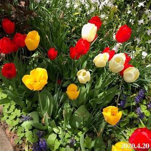 【店長ブログ】花の季節になりましたね!