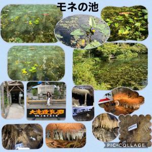 モネの池 & 鍾乳洞