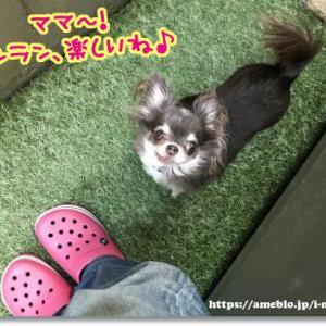 【Rina】血尿の再発!!