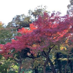 旧古河庭園へ行き、日本庭園の紅葉を見ました。