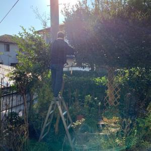 庭木の剪定・誘引などしました。