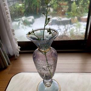 雪でデルフィニウム・ミントブルーが折れたのを花瓶に生けた。雪の中の花の撮影。