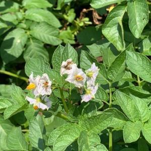 植物の画像検索アプリ「Picture this」で調べた植物。