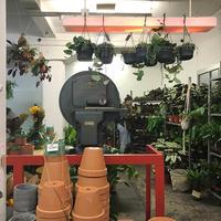 【イベントレポート】フランクフルトのアトリエスペースで植物の期間限定ストアがオープン