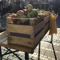 【収穫の季節】フランクフルトに秋到来!この時期試したい旬の味覚いろいろ