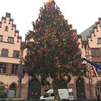 レーマー広場のクリスマスツリーがついに完成!