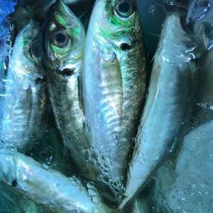 真夏な魚!