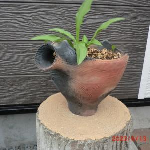 手作り植木鉢 その2