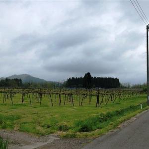純国産!地元小坂町醸造のワインを飲んで応援!