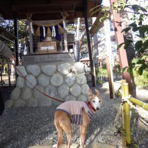 犬山神社にお参り