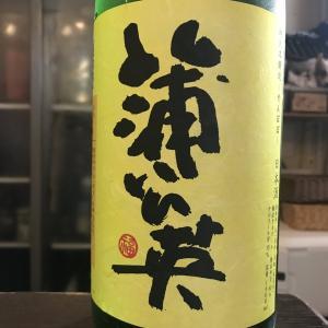 福岡県 若波酒造 蒲公英 特別本醸造!