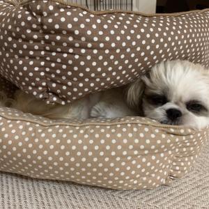 2段ベッド♪&モデルナアーム