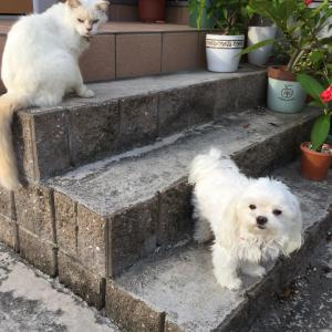 ハロウィンカボチャと犬と猫