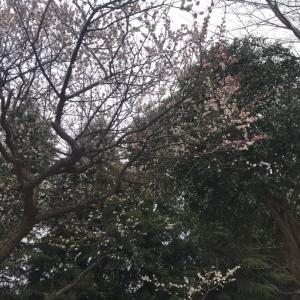 ★ワイチ先生day/八千代緑が丘ヒップホップ