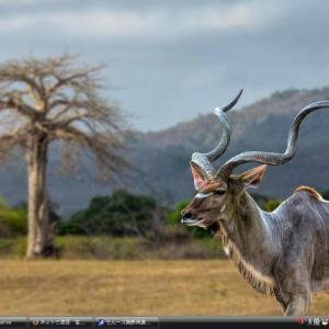 セルース猟獣保護区 - タンザニア 世界遺産 写真・壁紙集