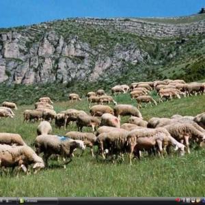 コースとセヴェンヌの地中海農牧業の景観 - フランス 世界遺産