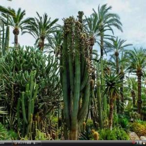 エルチェの椰子園 -スペイン 世界遺産 写真・壁紙集