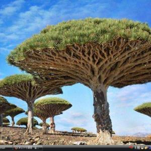 ソコトラ群島 - イエメン 世界遺産 写真・壁紙集