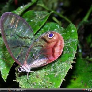 タラマンカ=ラ・アミスター国立公園 - コスタリカ・パナマ 世界遺産
