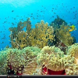 サンガネーブ海洋国立公園とドンゴナーブ湾 - スーダン 世界遺産