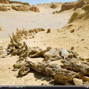 ワディ・アル・ヒタン(クジラ渓谷) -エジプト 世界遺産 写真・壁紙集