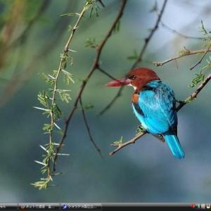 ケオラデオ国立公園 - インド 世界遺産 写真・壁紙集