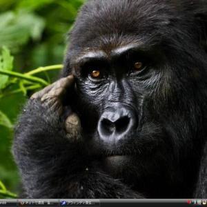 ブウィンディ原生国立公園 - ウガンダ 世界遺産 写真・壁紙集